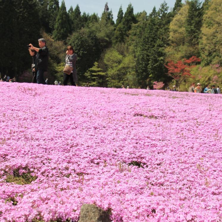 Travel Hyogo Is More Than Kobe Ira Dan Hujan